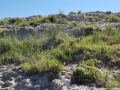 Plants of Scottsbluff National Monument